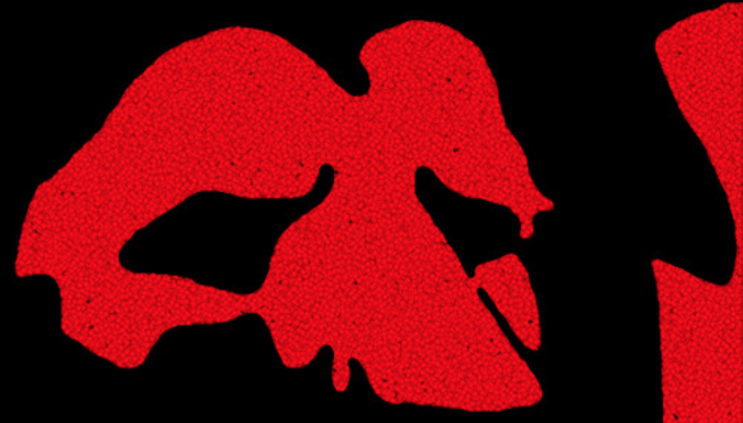 A drawn red lion like face on black background in the shape of Africa