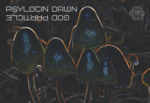 Contour florescent psilocybin mushrooms in a dark landscape