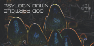 Contour florescent psilocybin mushrooms in a dark landscape