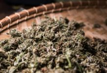 dried green herb on brown wicker tray