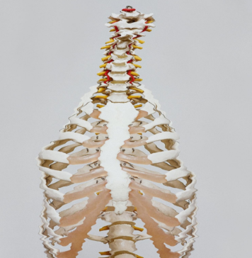 distorted skeleton torso, spine and neck without a head